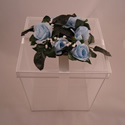 Blue roses on an organza butterfly release box.